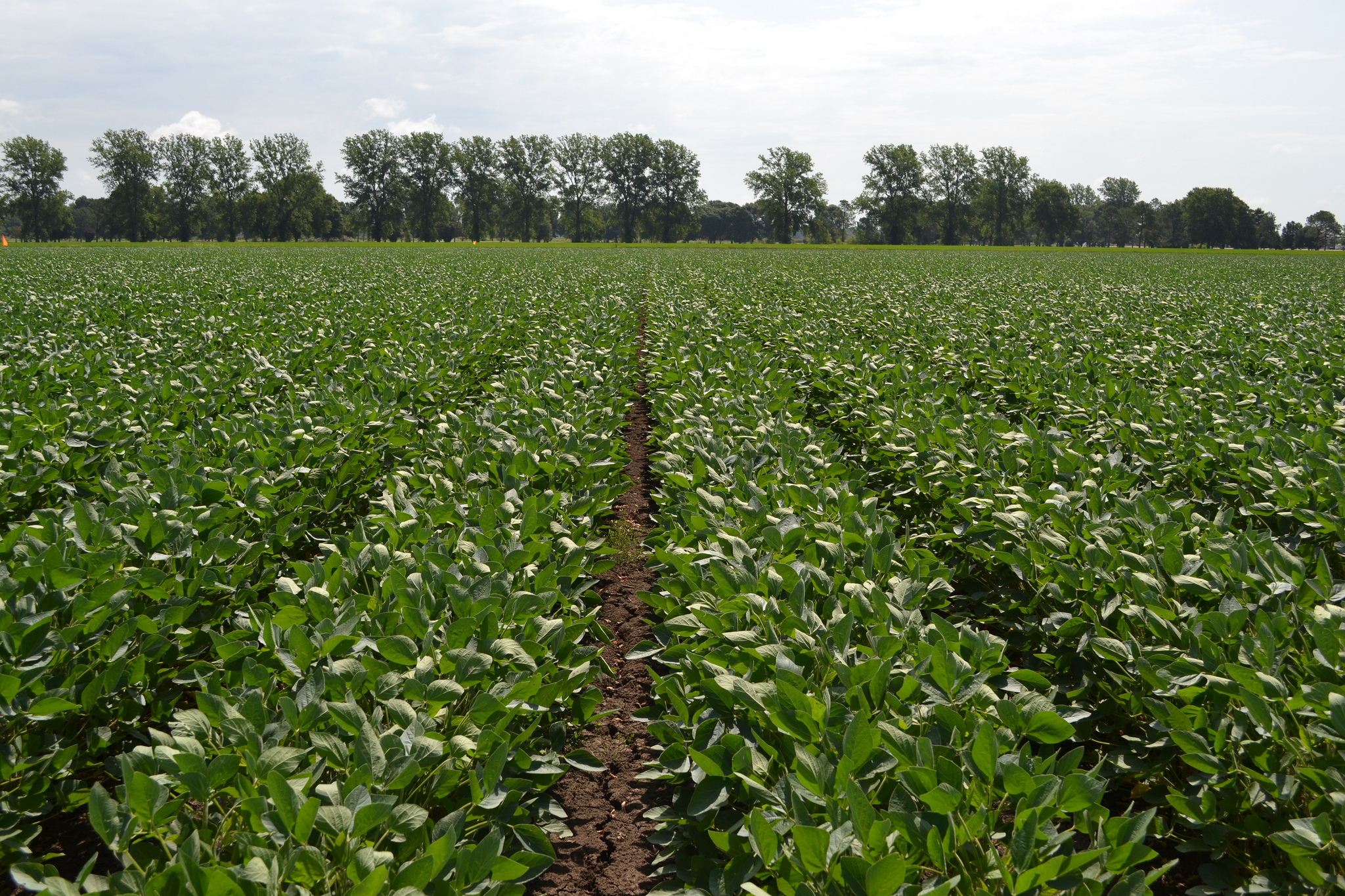 BASF to acquire significant seed, herbicide assets of Bayer   Feedstuffs