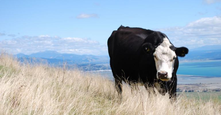 7-14-21 cow in drought.jpg