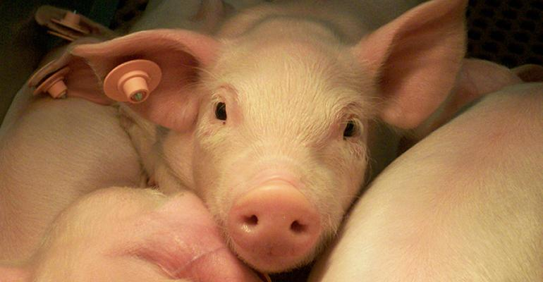 ARS scientists are studying a natural supplement as a possible alternative to antibiotics for promoting pig health and growth.
