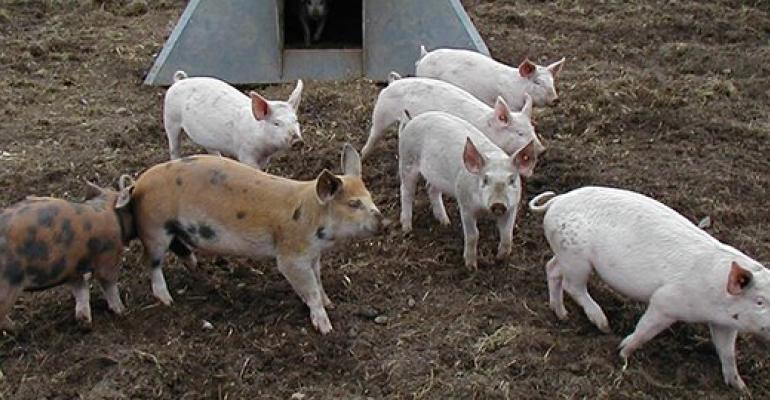 Danish organic pigs