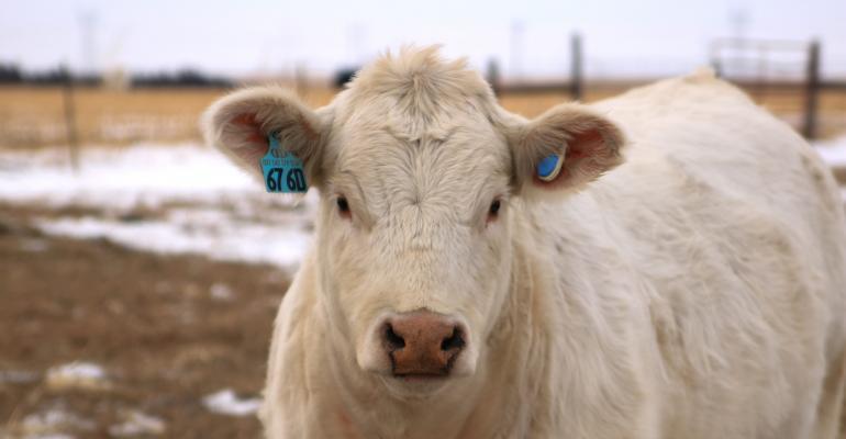 Allflex cow monitoring solution