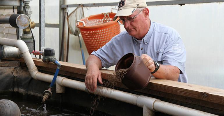 Auburn University associate professor Jesse Chappell feeds fish that are part of an aquaponics project, a process which takes nutrients from fish waste and uses it to grow vegetables.