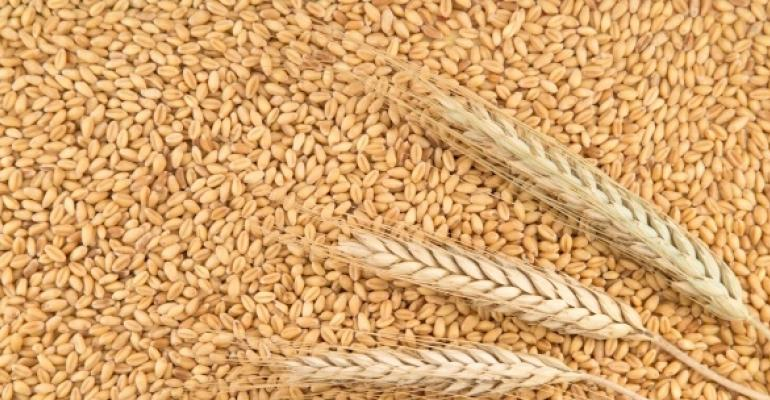 wheat grains and stalks