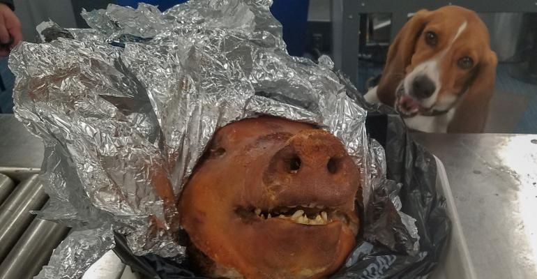 Canine border patrol pigs head.jpg