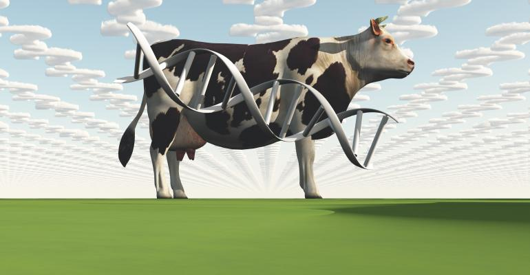 Cattle DNA concept