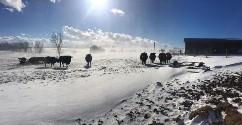 Cattle winter snow USDA.jpg