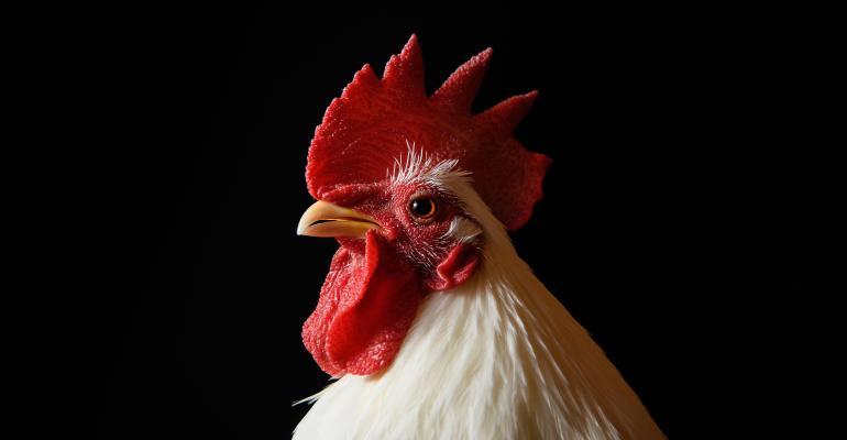 Japanese Bantam chicken