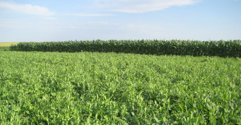 Cover Crop mix USDA.jpg