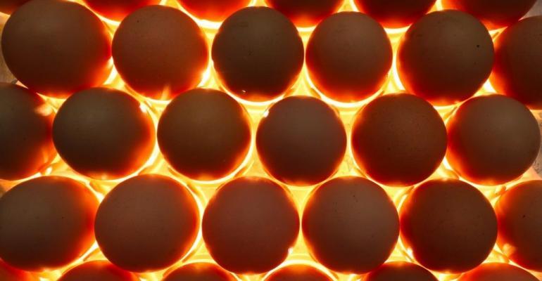 FFAR egg candling.jpg