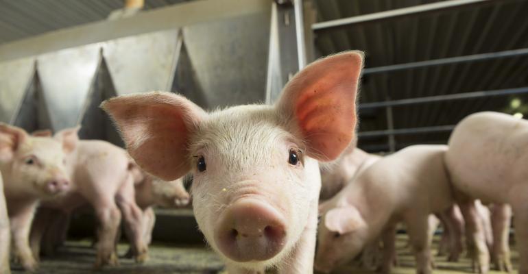 Feeder Pigs (1).jpg