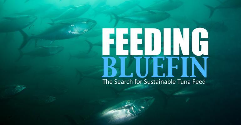 Feeding Bluefin poster