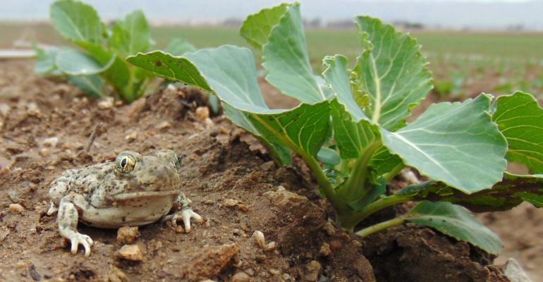Frog near crop_credit Daniel F. Hughes.jpg