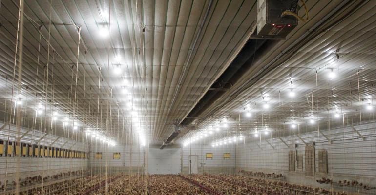 Poultry farm using Grotube radiant heat