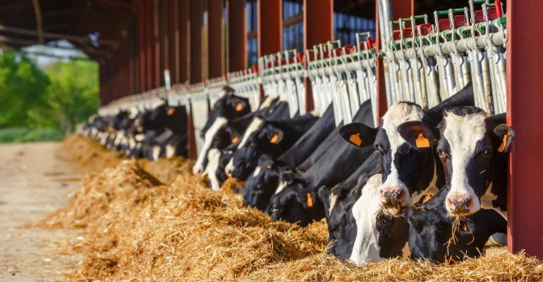 Holstein dairy cows eating at feed bunk_pixinoo_iStock_Thinkstock-679531082.jpg