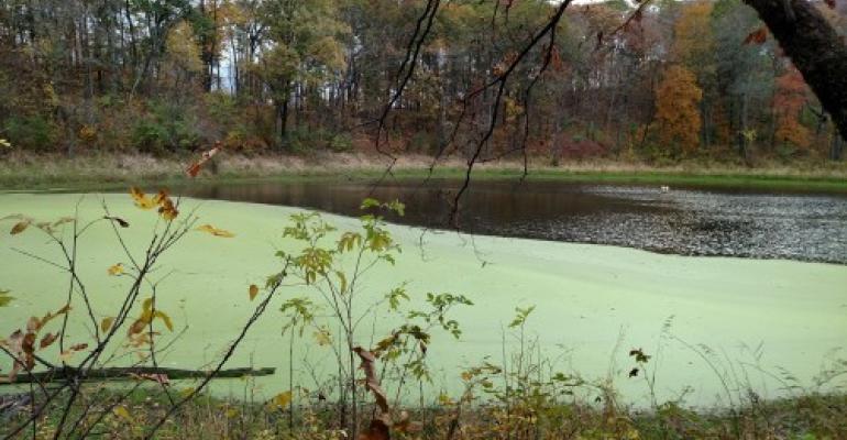 Algal bloom in Iowa lake