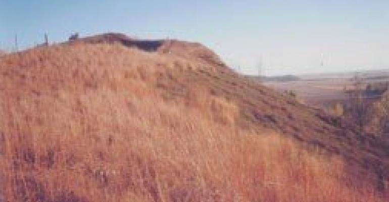 crown vetch growing on Iowa hillside