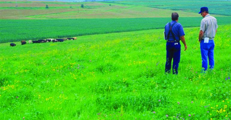 Cattle being monitored while grazing Iowa pasture