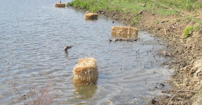 Kansas State barley straw blue green algae.jpg