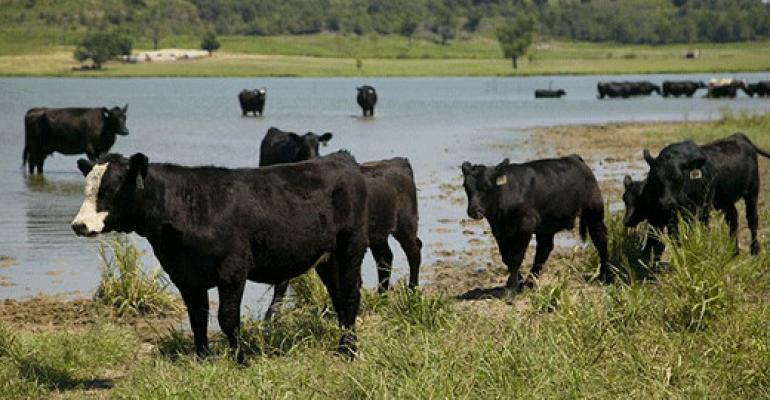 Kansas State blue green algae cattle ponds.jpg