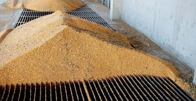 Corn piles at grain elevator.
