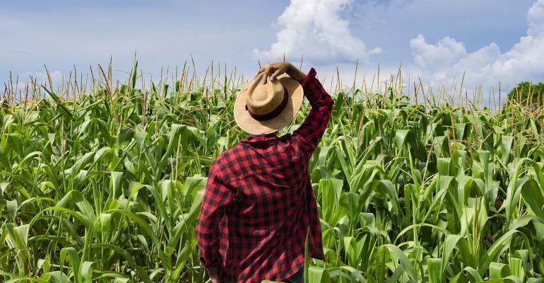 Brazil  - Farmer with hat looking the corn plantation field