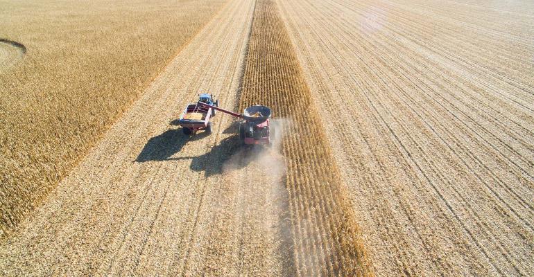Harvesting corn - aerial view. Combine and grain cart
