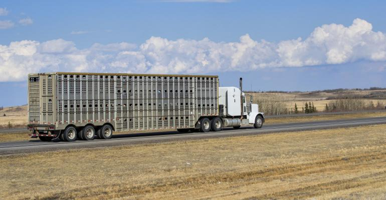 Livestock hauler-GettyImages671105132.jpg