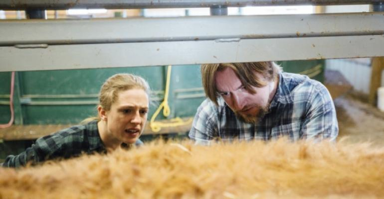 Carl Yeoman, right, associate professor at Montana State University, and Deanna DeSon, a senior in microbiology, remove feed from a cannulated cow to gather rumen fluid.