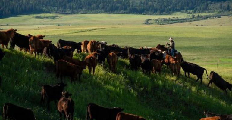 Montana State Ft Ellis ranch.jpg