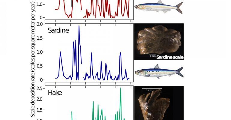 Forage fish population flucuation infographic