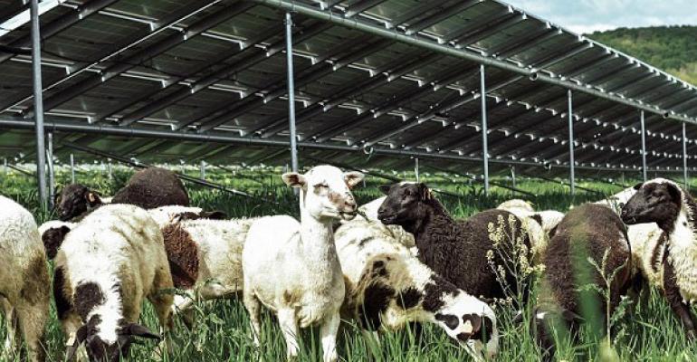 Nexamp solar grazing.jpg