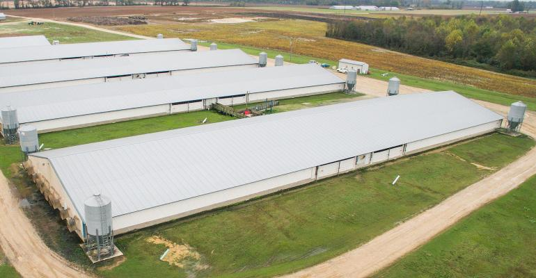hog barns in North Carolina