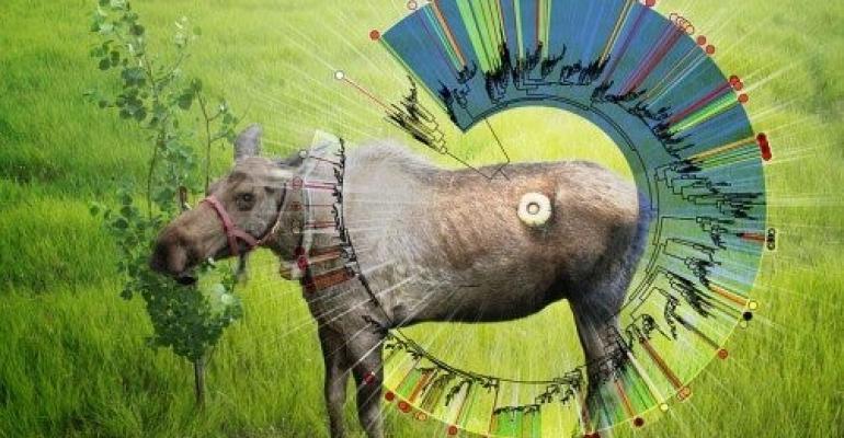 Ohio State PNNL moose digestion.jpg