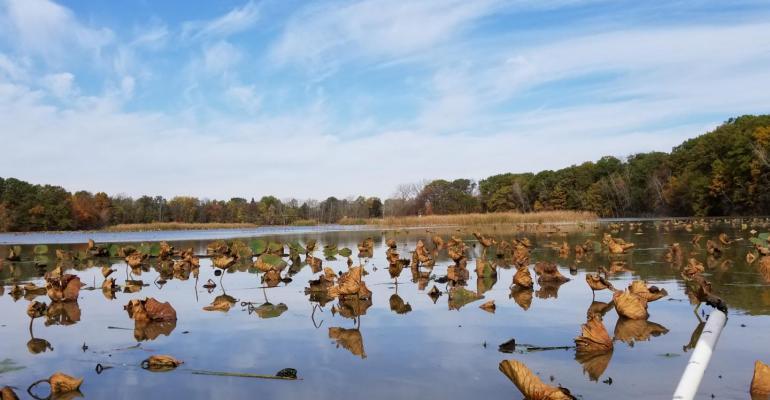 Lake Erie wetland (Old Woman Creek National Estuarine Research Reserve),