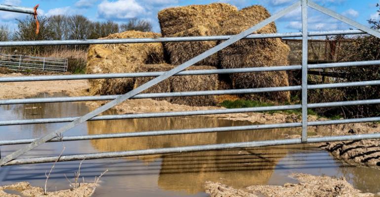 Oklahoma State moldy hay.jpg