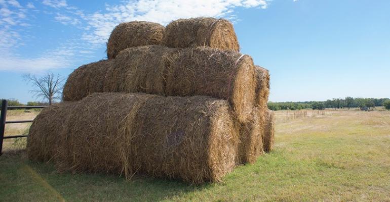 OklahomaState unrolling hay.jpg