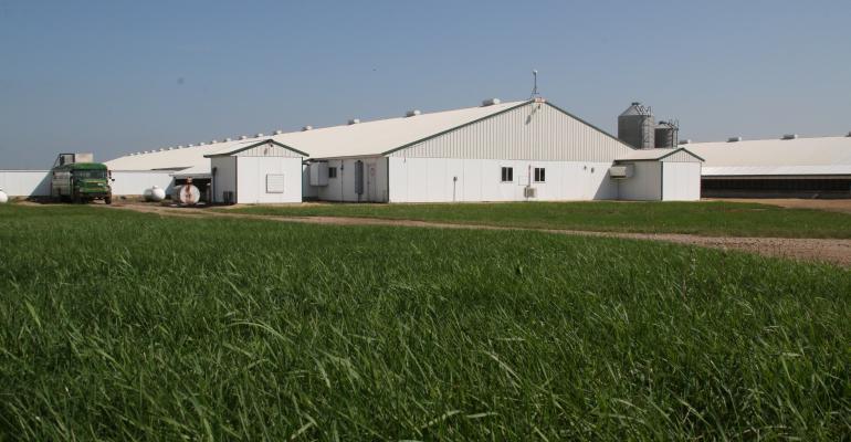 Pig Farm.jpg