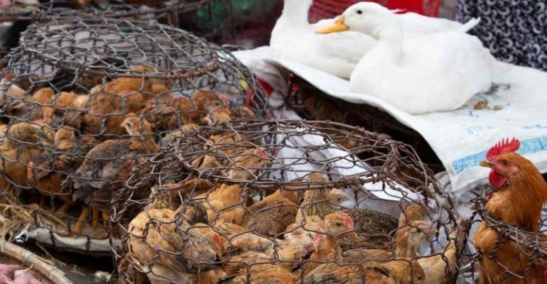 Pirbright Vietnam live poultry.jpg