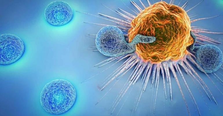 Pirbright goat immune cells.jpg