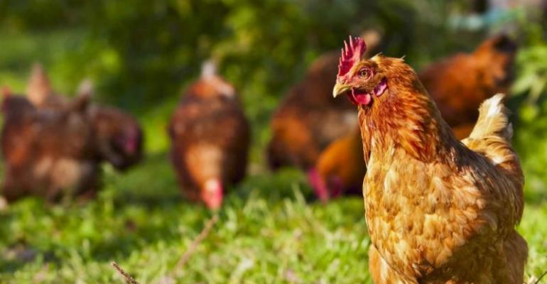 Pirbright influenza antibody chickens.jpg