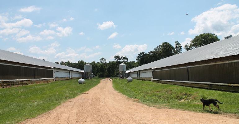 New and modern poultry houses on the Pham Farm Hazlehurst, MS.