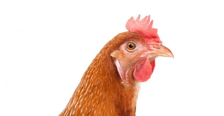 Red hen head_suriyasilsaksom_iStock_Thinkstock-502348950.jpg