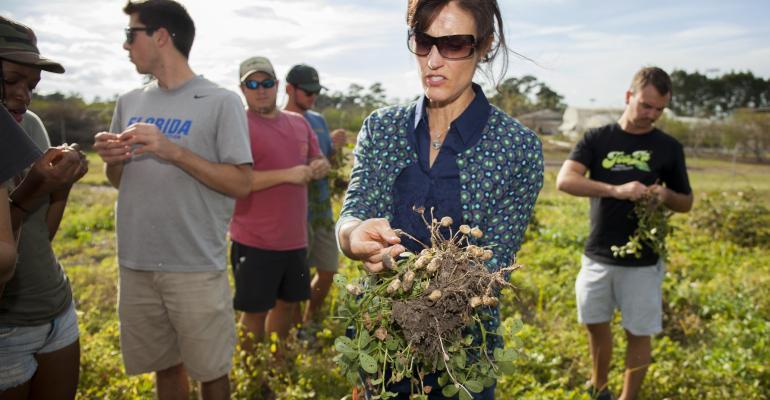 Agronomy professor harvests peanuts