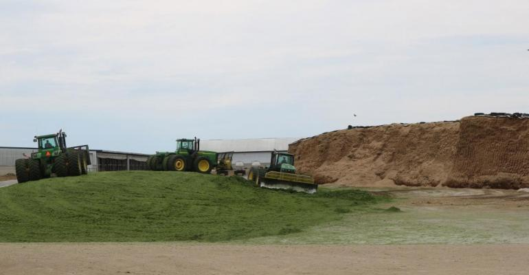 SDSU packing silage.jpg