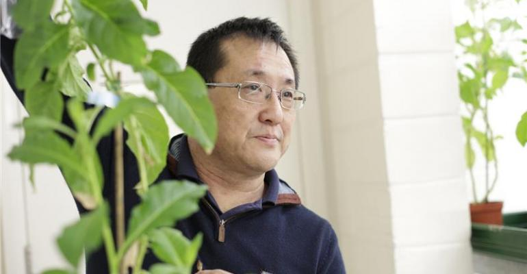 Professor Julian Ma with tobacco plant.