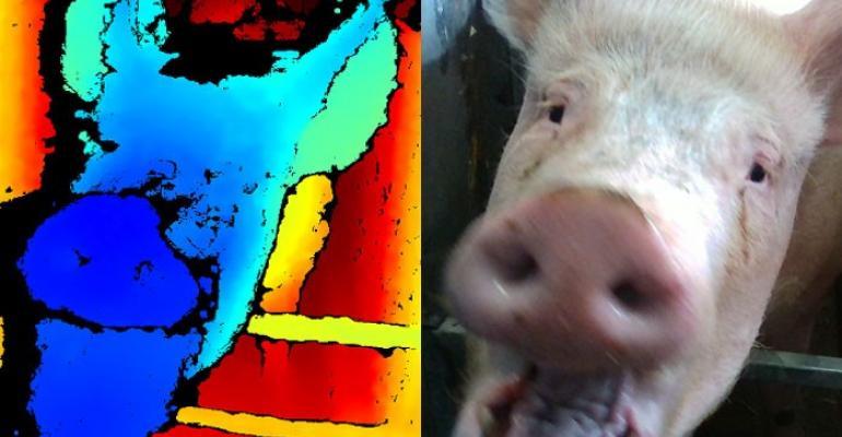 SRUC pig facial expression.jpg