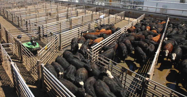 cattle robot in Schuyler cattle pens
