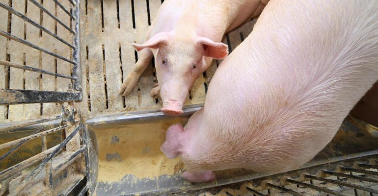 Sow eating in penGettyImages-543839940.jpg