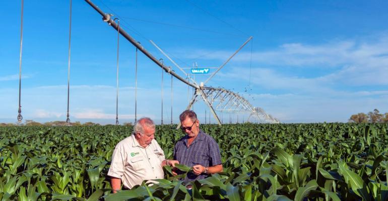 Syngenta-Joins-FFARs-Crops-of-the-Future-Consortium-Zambian-farmers-in-Maize-field-1024x682.jpg