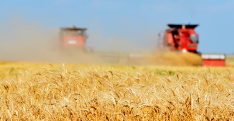 A new Texas A&M AgriLife Research study will be looking at the viability of organic wheat in the Texas High Plains and Rolling Plains.